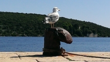 Seagull at the old dock